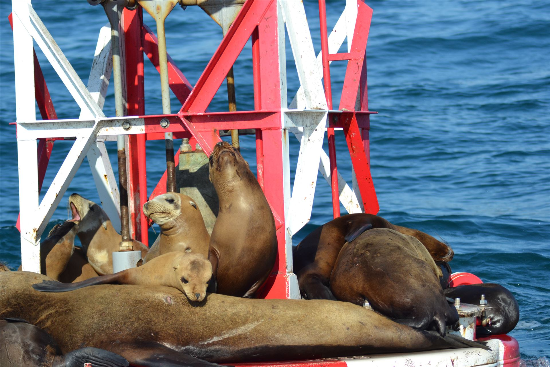 Lazy Days 2.JPG - Lazy Sea Lions emulating a vacation mindset by 405 Exposure